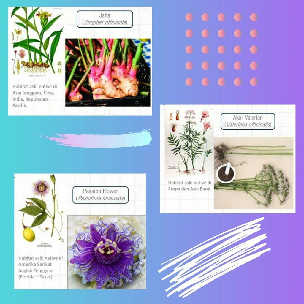 Jenis Herbal Untuk Mengatasi Gangguan Tidur